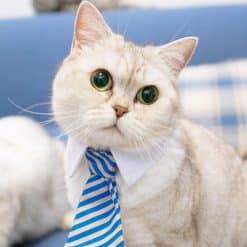 Rayados-mascotas-pajarita-del-poliester-Cotton-estilo-Gentleman-del-gato-del-perro-corbata-Boutique-accesorios-para